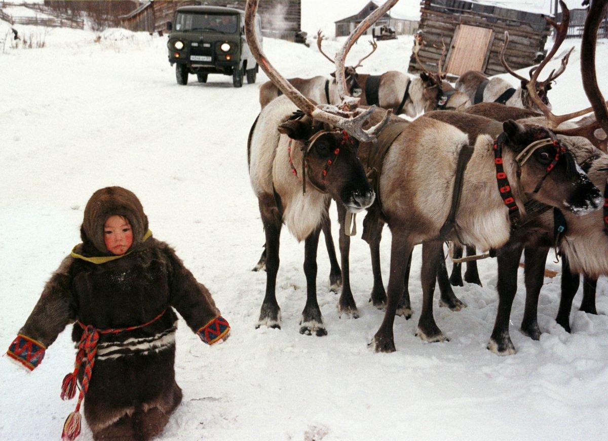 Reuters / Una bambina cammina nella neve a -30° accanto a delle renne, il 6 novembre 1998, nel villaggio di Aksarka, circa 2000km da Mosca.